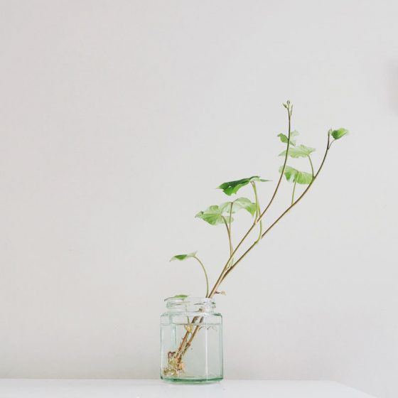 plant in a jar neutral backdrop