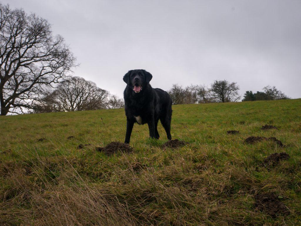 long weekend wales winter break dog