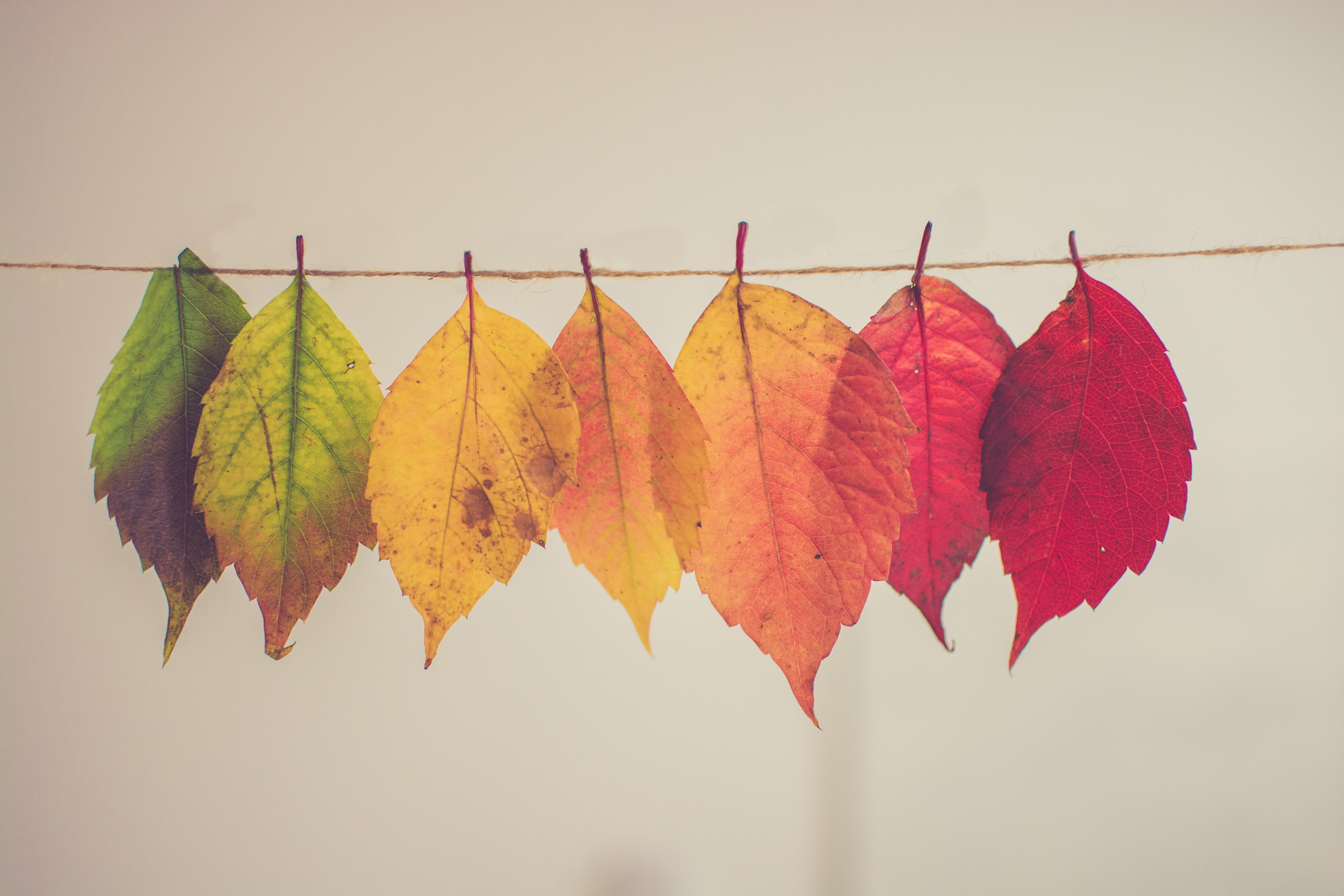 50 things to do this autumn