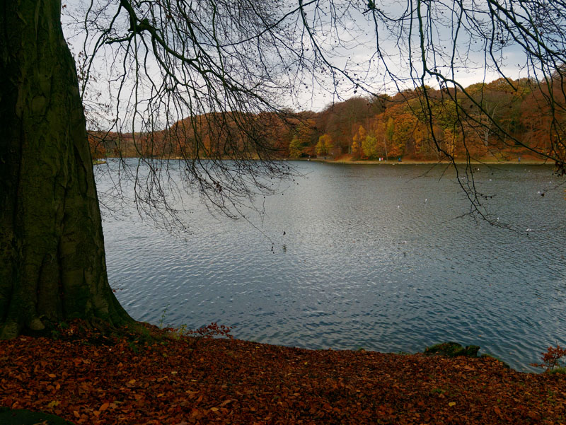 lake surrounded by Autumn trees