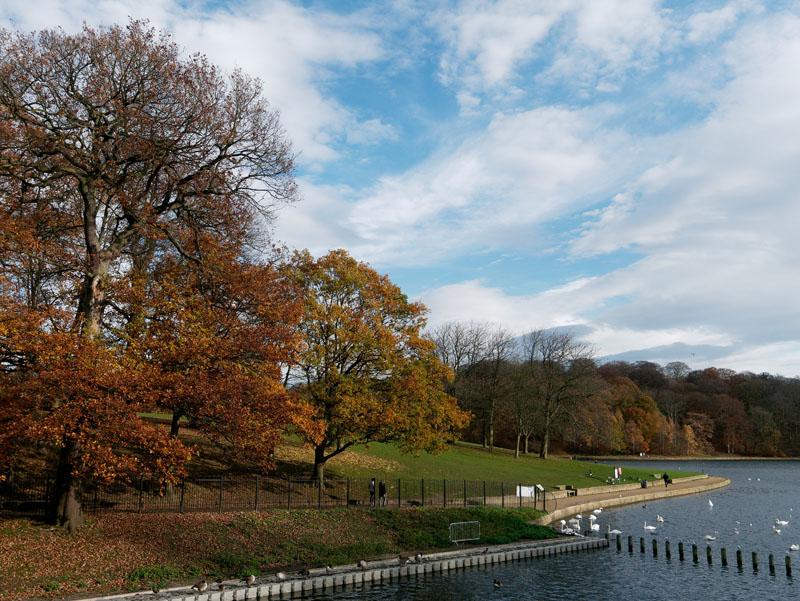 autumn day lake and autumn trees