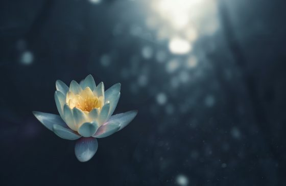 water lily meditation pitfalls