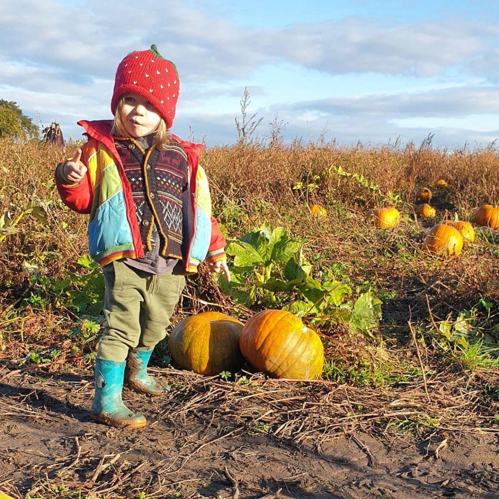 cute child in a pumpkin patch